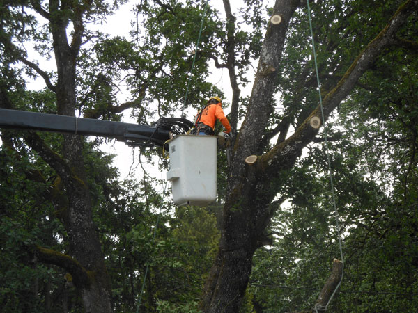 Best-Arborist-Pierce-County-WA