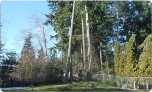 Best-Tree-Service-DuPont-WA