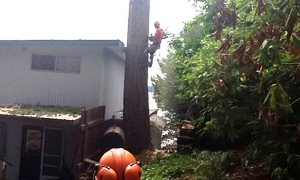 Certified-Arborist-Lakewood-WA