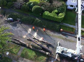 Emergency-Tree-Removal-Tacoma-WA