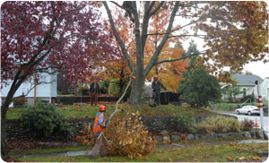 tree-service-fircrest-wa