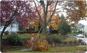 Hunter-Tree-Service-in-Tacoma-8.jpg