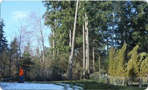 Stump-Removal1-Gig-Harbor-WA.jpg