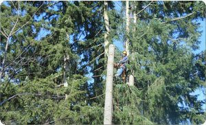 Stump-Removals-Gig-Harbor-WA.jpg