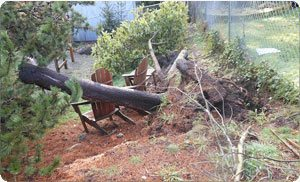stump-removal1-bonney-lake-wa.jpg