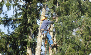 Stump-Removals-puyallup