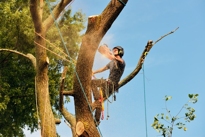 Tree-Cutting-Service-DuPont-WA