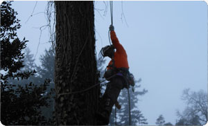 tree-removal-federal-way-wa