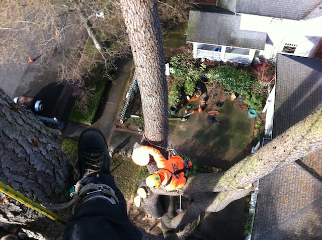 Tree-Removal-Company-Lakewood-WA