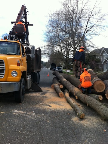 Tree-Removal-Gig-Harbor