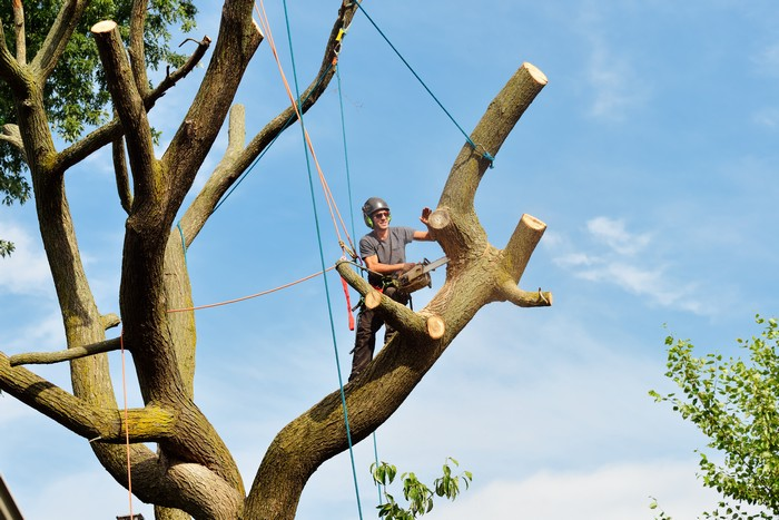 Tree-Removal-Service-DuPont-WA