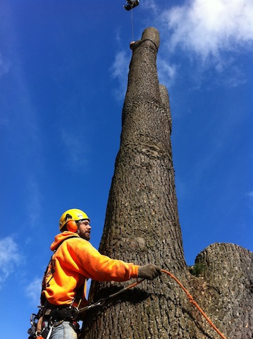 Tree-Removal-Tacoma-WA