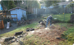 tree-removal-fircrest-wa