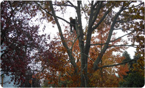 tree-care-sumner-wa