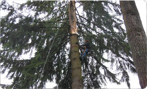 Tree-Services-Sumner-WA