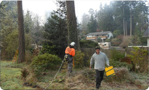 tree-care-steilacoom-wa