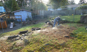 stump-removal-tacoma-wa1