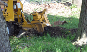 stump-removal-steilacoom-wa