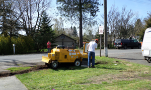 tree-removal-services-steilacoom-wa