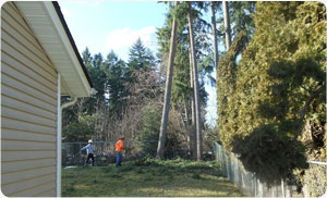 Arborist-Pierce-County-WA