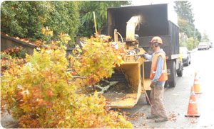 Tree-Care-Pierce-County-WA