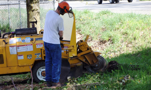stump-grinding-lakewood.-wa