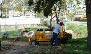 stump-grinding-university-place-wa