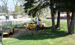 stump-removal-lakewood-wa