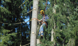 Tree-Removal-Bonney-Lake-WA