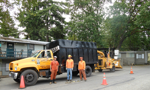 tree-removal-lakewood-wa