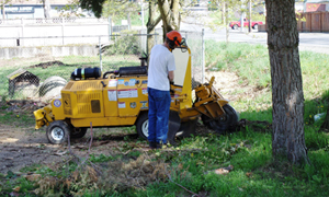 tree-removal-services-lakewood-wa