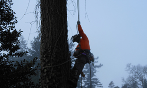 tree-service-lakewood-wa
