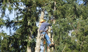 Tree-Service-Bonney-Lake-WA